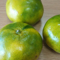 橘子皮可以做什么药膳食疗粥