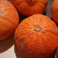 南瓜的營養價值