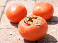 柿子不能和什么一起吃 柿子的饮食禁忌