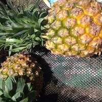 菠萝的营养价值 在家如何削菠萝皮