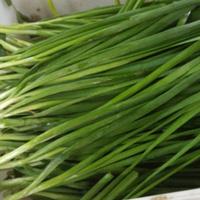 韭菜根♀治自汗盗汗 生活中常见烈阳军团菜根的作用