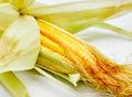 玉米能瘦身防病