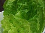 孕妇能吃生菜吗