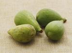 女性经期能吃无花果吗