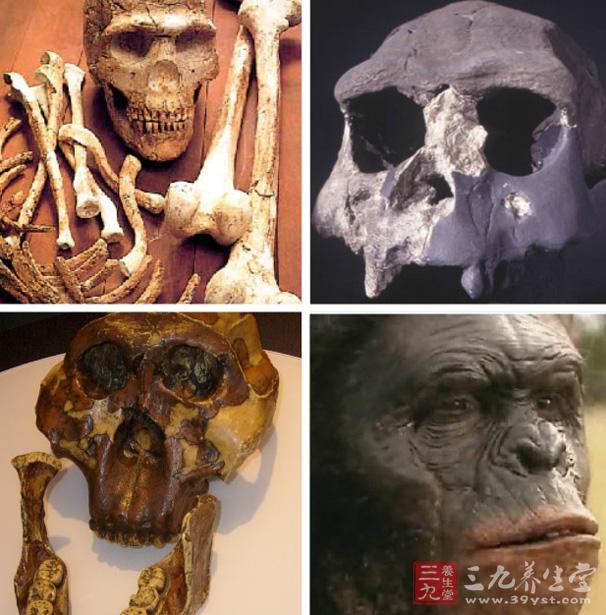 2003年,科学家在印尼弗洛里斯岛的一个石灰石岩洞中,发现了这些小矮人