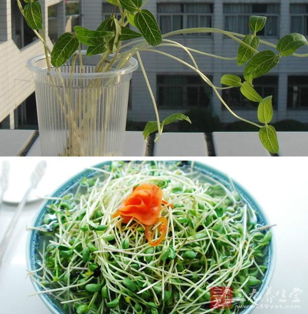 简易生绿豆芽的方法_绿豆芽的生法_绿豆芽的生法视频_淘宝助理