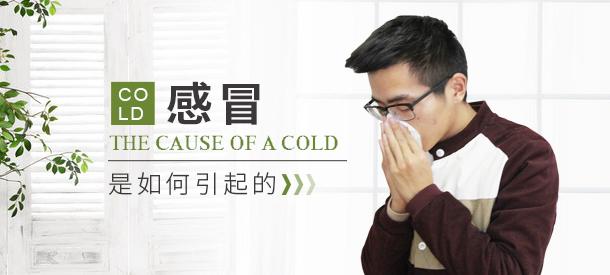 感冒是如何引起的