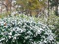 大雪节气养生攻略