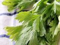 芹菜叶可以吃吗
