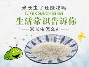 米长虫了还能吃吗 米长虫怎么办