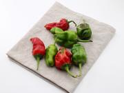 研究发现 吃点红辣椒 可使肺癌细胞转移放缓