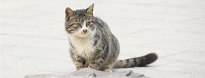 英国首例感染新冠病毒宠物猫