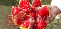 石榴有助消化、抗胃溃疡、软化血管