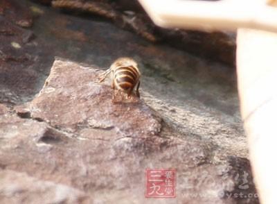 常见蜂蜜的种类和功效