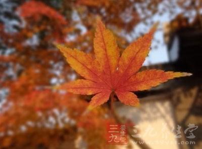 每到寒露节气,去赏红叶已经成为了很多人的一种习惯