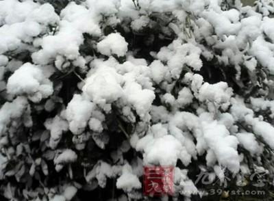 东北和西北有些地区已进入冬季,俨然一派白雪飘飘的冬天景象