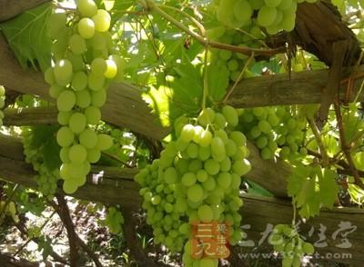 红葡萄酒和白葡萄酒的区别 4个方面看出不同