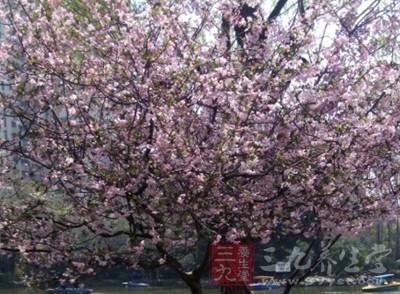 中国古代将立春的十五天分为三候