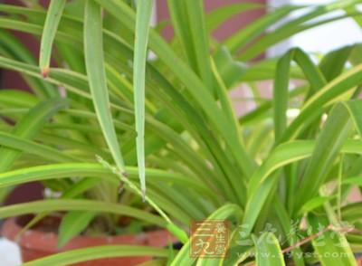 什么植物吸收甲醛 养点它吧
