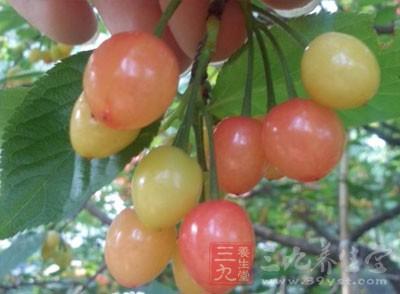 新鲜樱桃含糖、蛋白质、β胡萝卜素