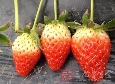 上班族的提神零食:草莓