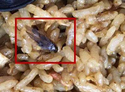 宁波餐厅外卖里竟然有蟑螂
