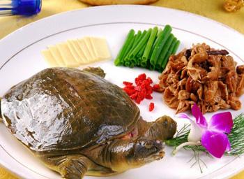 针灸减肥有哪些穴位_甲鱼的营养价值_甲鱼的功效与做法大全及怎么做好吃 - 牛哈健康网